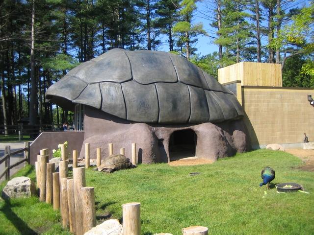 Pin Turtle House on Pinterest